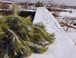 24_ae_snow5_5