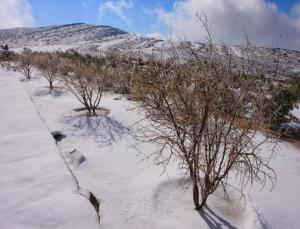 snow8_5